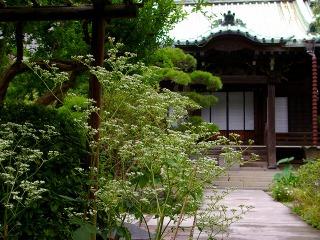 Daigyootokoeshi070911