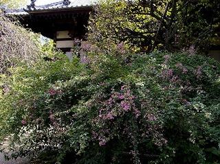 Hokaihagi071004