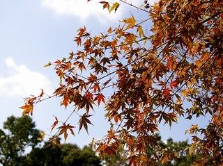 Kuzuharakoyo071023