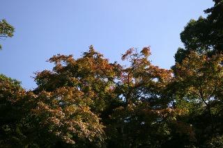 Kamakuragukoyo071104