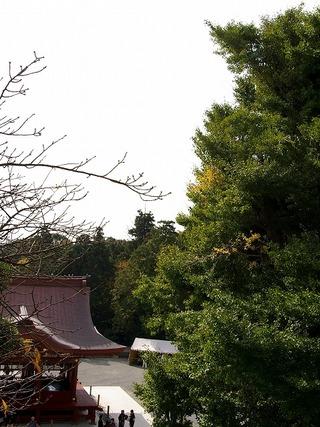 Hachimanoicho071105