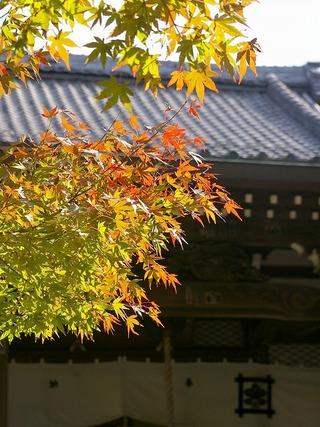 Ankokukoyo071121