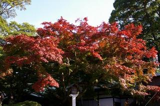 Kamakuragukoyo071123