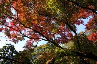 Kamakuragukoyo0711233