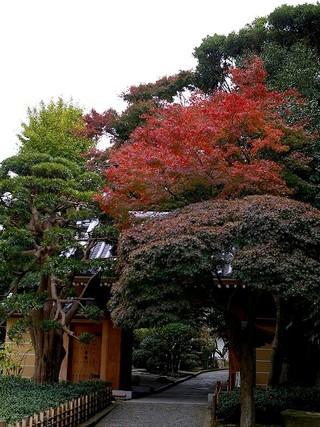 Hokokusanmon071127