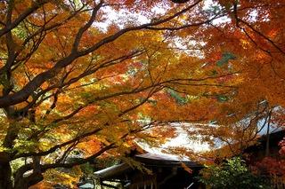 Kamakuragukoyo071206
