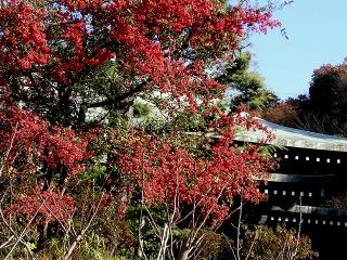 Ryuhopirakansa071207