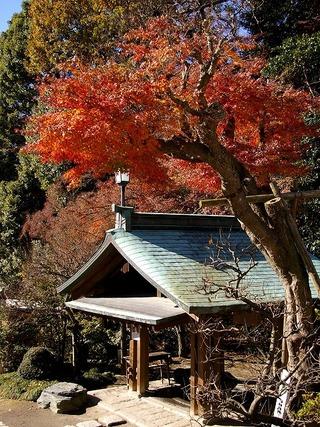Kamakuragukoyo071216