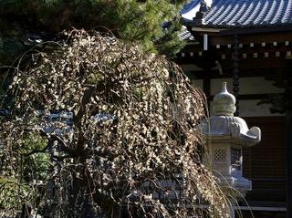 Joryuhakubai0802132