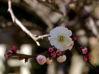Hokaiomoinomama080227