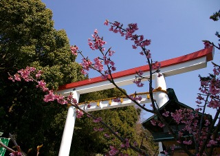 Kamakuragukawadu080307