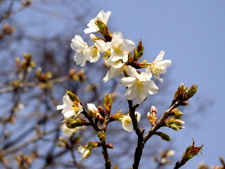 Hachimanoshima080313