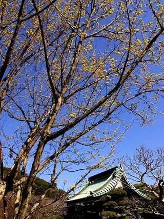 Hasesansyu080315