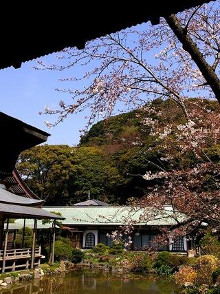 Komyokishu080326