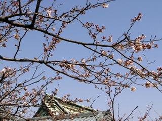 Kuhonsakura080326