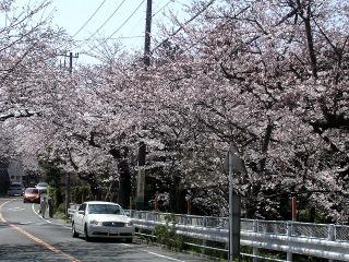 Kamakurayama080328