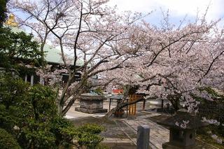 Choshosakura0803292
