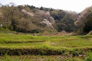 Chuokoensatoyama080403
