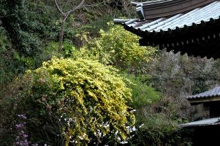 Shorenyamabuki080405