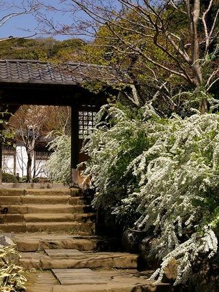 Kaizoyukiyanagi080406