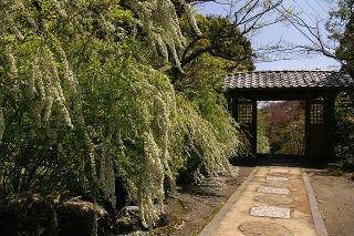 Kaizoyukiyanagi080411