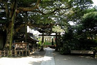 Tabunoki080716