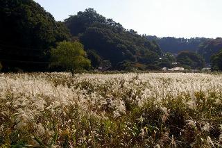 Yofukujisusuki081016