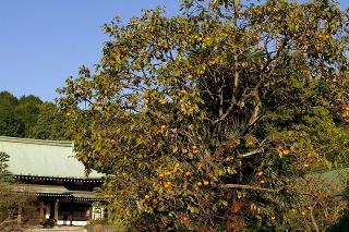 Ryuhokaki081017
