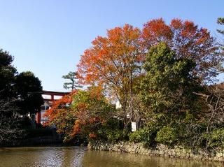 Hachimankoyo081126