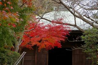 Choshokoyo081129