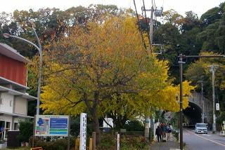 Shiyakusyoicho081129