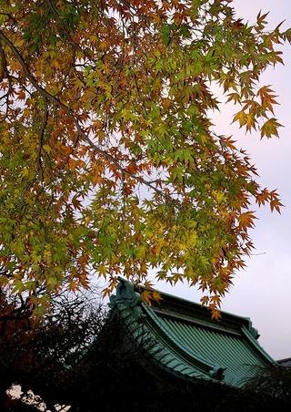 Hasekoyo0812022