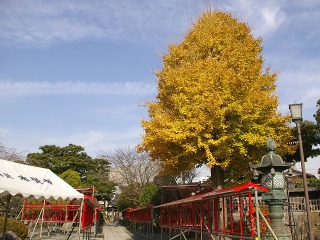 Hongakuicho081211