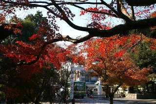 Kamakuragukoyo0812152
