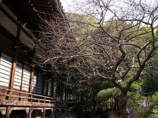 Ankokuronjiume090203