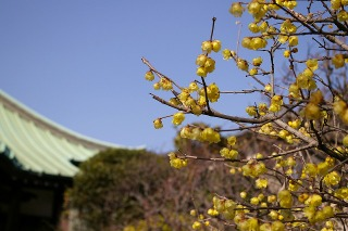 Shugenjirobai090210