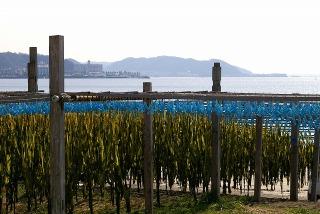 Wakamehosi090210
