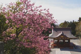 Hachimankawaduzakura0902172