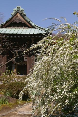 Kaizojiyukiyanagi0903272