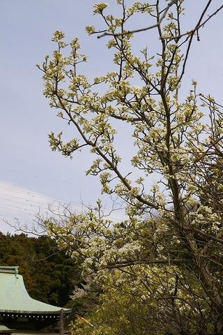 Ryuhojimarumero090331