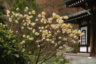 Ryuhojimitumata090331