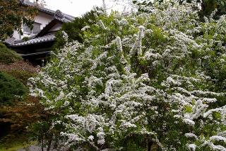 Teisojiyukiyanagi090331