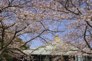 Choshojisakura090402