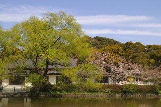 Hachimanyanagi090402