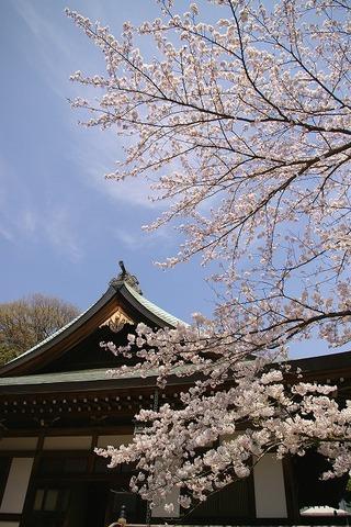 Hokokujisakura0904062