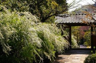 Kaizojiyukiyanagi090409