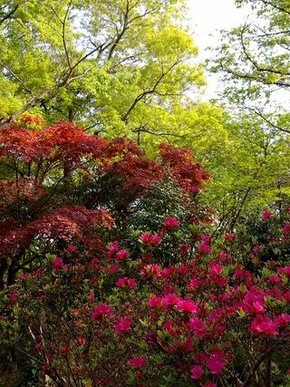 Kuzuharatutuji090416