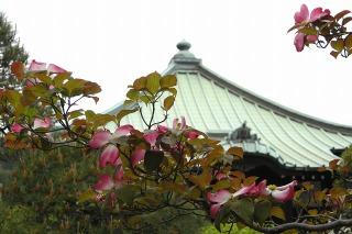 Shugenjihanamizuki090421