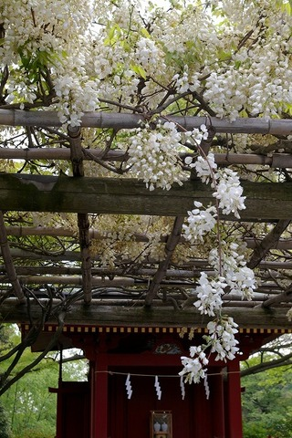 Hachimanfuji090423