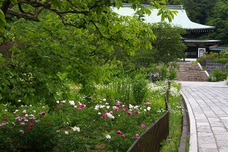 Ryuhojisyakuyaku090513